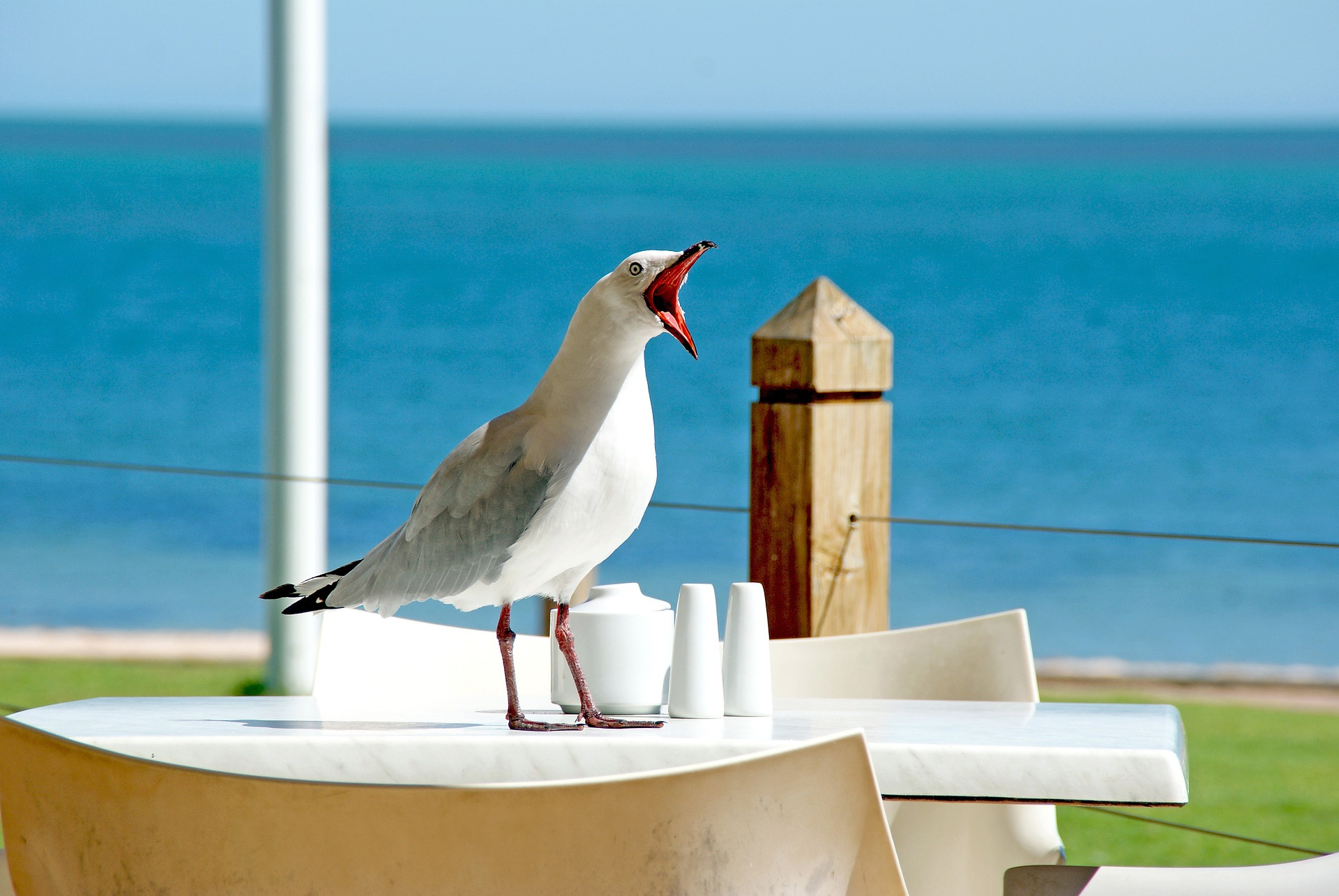 Stop feeding the seagulls    or you could be fined £1,000
