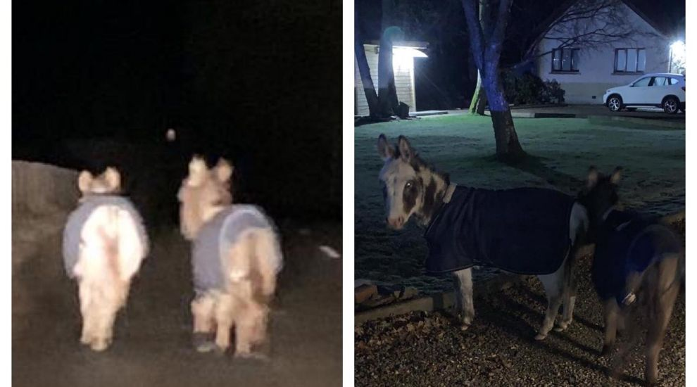 Donkeys rescued by police after 'romantic' Valentine's Day stroll