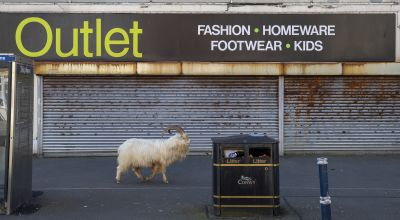 In Pictures: Nanny state – goats make most of deserted streets
