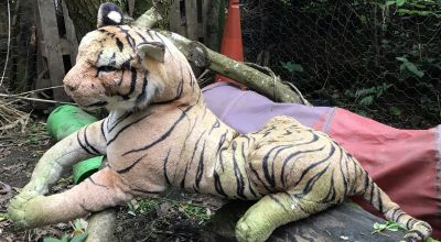 'Caged tiger' among RSPCA's strangest calls of 2019