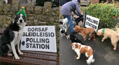#dogsatpollingstations gets festive twist for December election