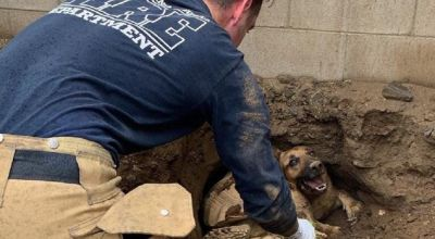 Firefighters called as man, dog and tortoise all get stuck in hole