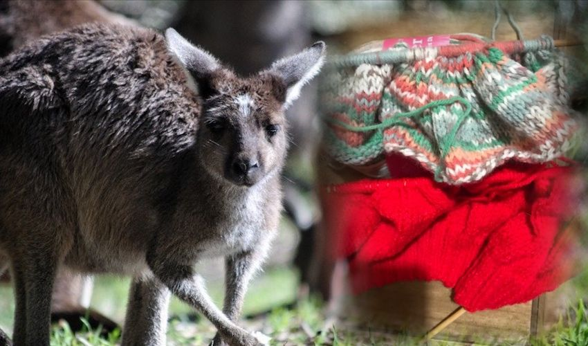 Jersey crafters 'stitch' in to rescue Australian wildlife