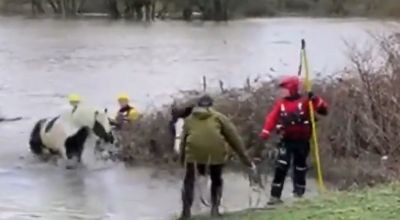 Horses rescued from flooded field as emergency services battle Storm Ciara