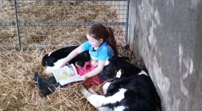 Watch: Six-year-old girl reads book to calves during coronavirus lockdown