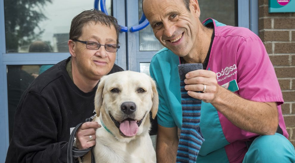 Labrador puppy undergoes surgery after swallowing sock