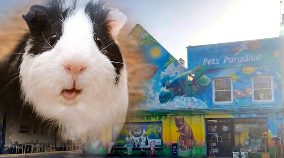 Woman arrested over Guinea pig thefts