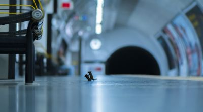 Mice 'squabbling' on Tube station platform win wildlife photography award