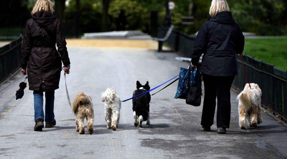 UK dog owners more likely to meet physical activity targets, study suggests