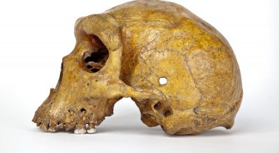 Broken Hill skull 'younger than thought'