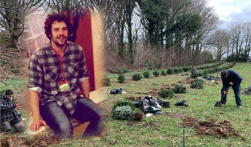 Local tree surgeon launches 'adopt a Christmas tree' scheme