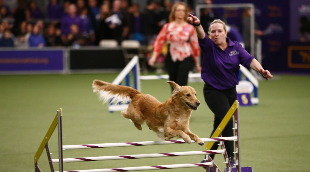Social media falls in love with pups at this year's Westminster Dog Show