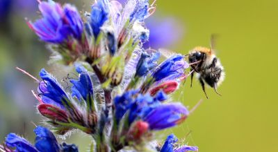 Bumblebees 'can recognise objects in the dark using the sense of touch'