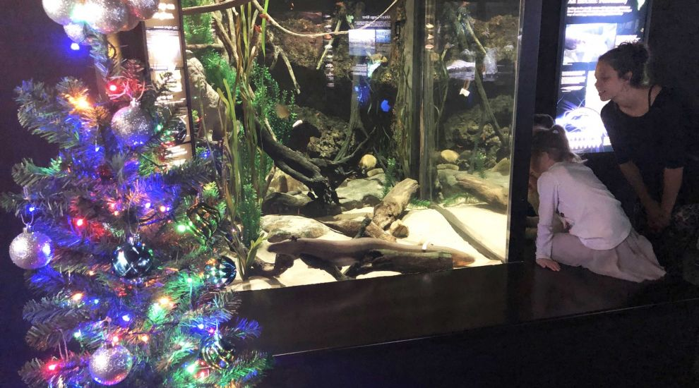Christmas lights 'powered by electric eel' at aquarium