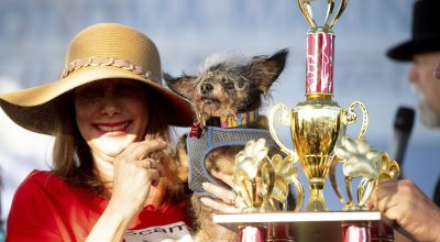 Scamp the Tramp wins California Ugly Dog Contest