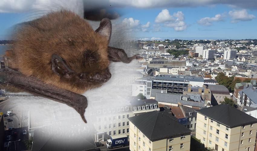 'Batty' course to build biodiversity