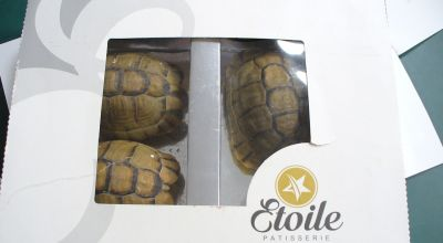 Man attempts to smuggle three tortoises disguised as pastries