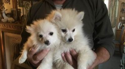 Police investigating after two puppies and dog stolen in burglary