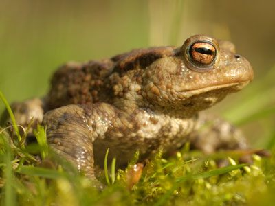 Help stop pond life croaking it!