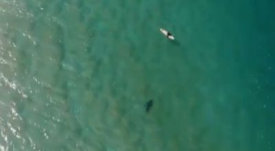 Surfer saved from shark attack thanks to warning from drone