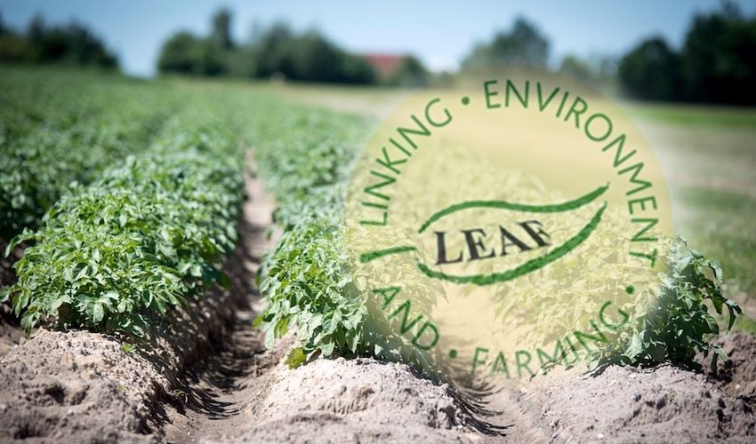 Be-leaf in a new environmental standard