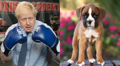 Boris Johnson replaced by puppies thanks to new online tool