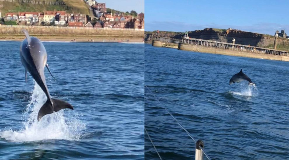 Dolphins caught on camera as they jump for tourists off coast of Whitby