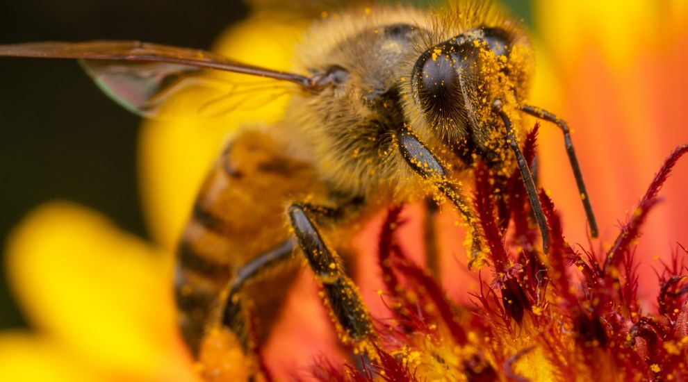 Roundup weed killer could be lethal to bees, according to a study
