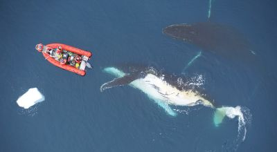 The limits of ocean heavyweights: Prey availability helps curb size of whales