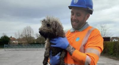 Dog rescued after spending almost 24 hours stuck in pipe