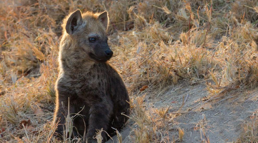 Hyena cache locations