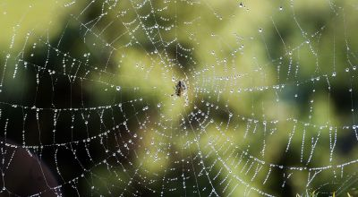 How to remove spiders humanely as autumn brings influx of arachnids