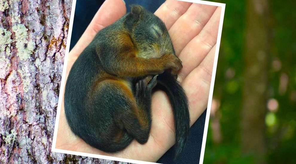 VIDEO: Orphan squirrel hand-reared to health