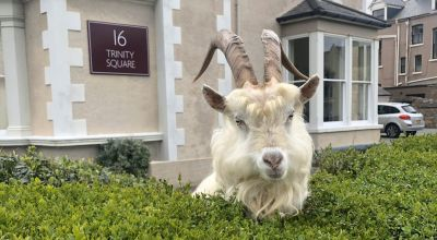 Mountain goats take over deserted streets in seaside town